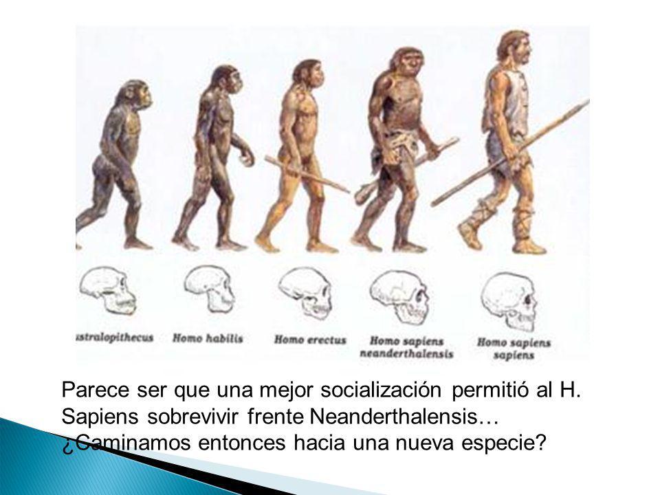 Parece ser que una mejor socialización permitió al H. Sapiens sobrevivir frente Neanderthalensis… ¿Caminamos entonces hacia una nueva especie?