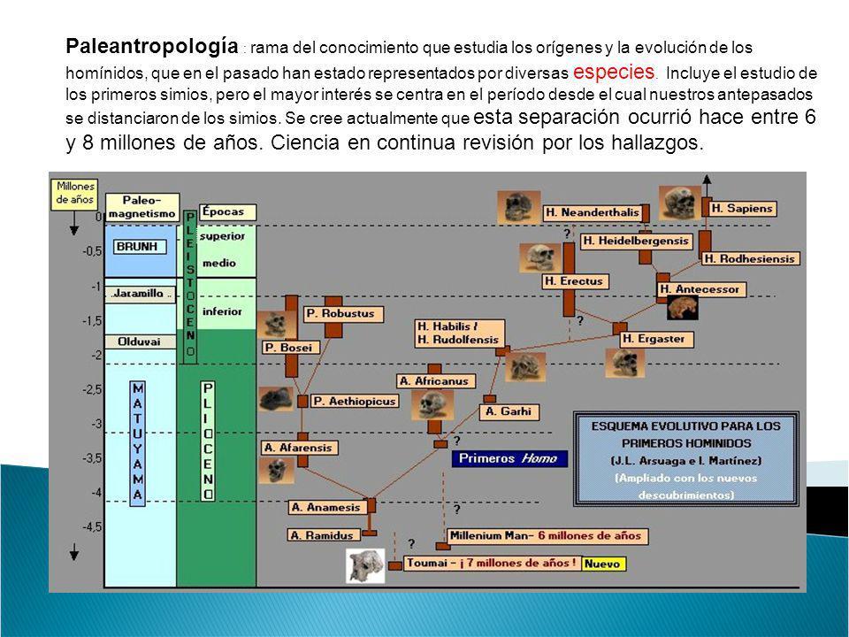 Paleantropología : rama del conocimiento que estudia los orígenes y la evolución de los homínidos, que en el pasado han estado representados por diver