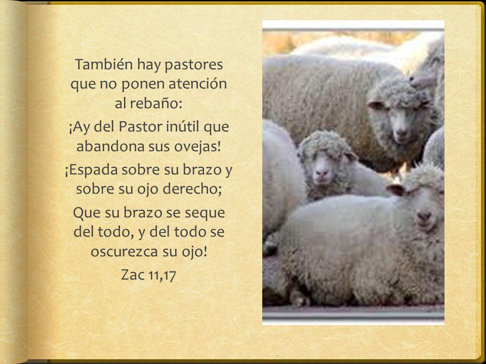 También hay pastores que no ponen atención al rebaño: ¡Ay del Pastor inútil que abandona sus ovejas.