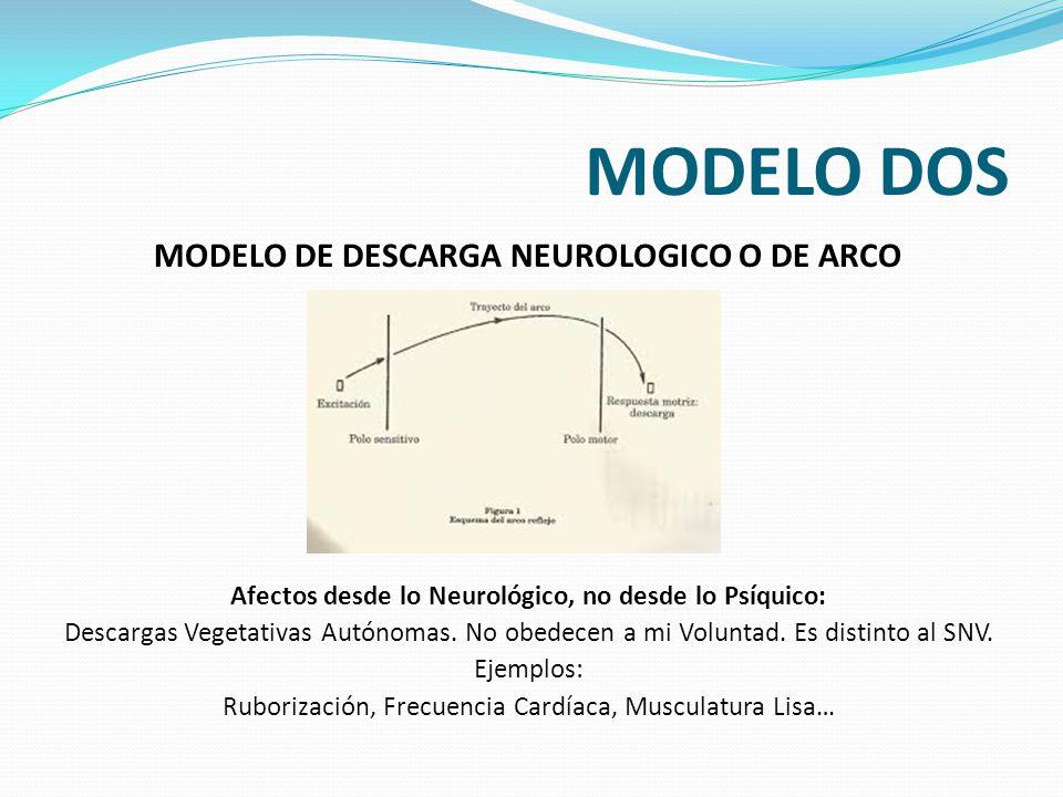 MODELO DOS MODELO DE DESCARGA NEUROLOGICO O DE ARCO REFLEJO Afectos desde lo Neurológico, no desde lo Psíquico: Descargas Vegetativas Autónomas. No ob
