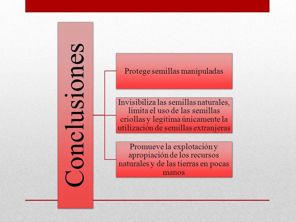 Conclusiones Protege semillas manipuladas Invisibiliza las semillas naturales, limita el uso de las semillas criollas y legitima únicamente la utiliza