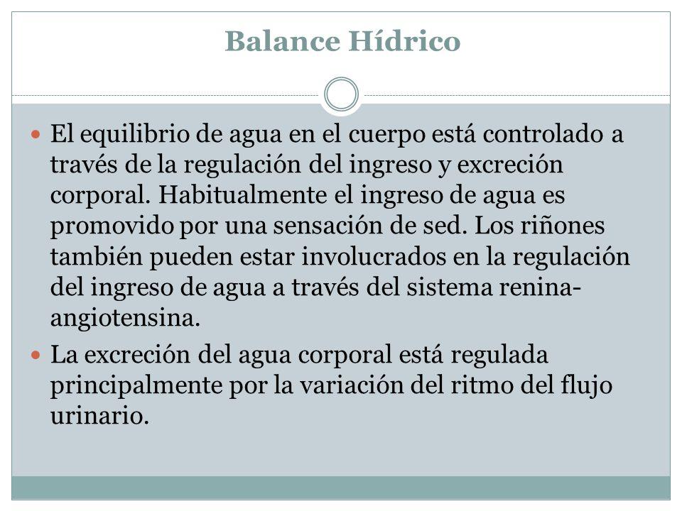Balance Hídrico El equilibrio de agua en el cuerpo está controlado a través de la regulación del ingreso y excreción corporal. Habitualmente el ingres