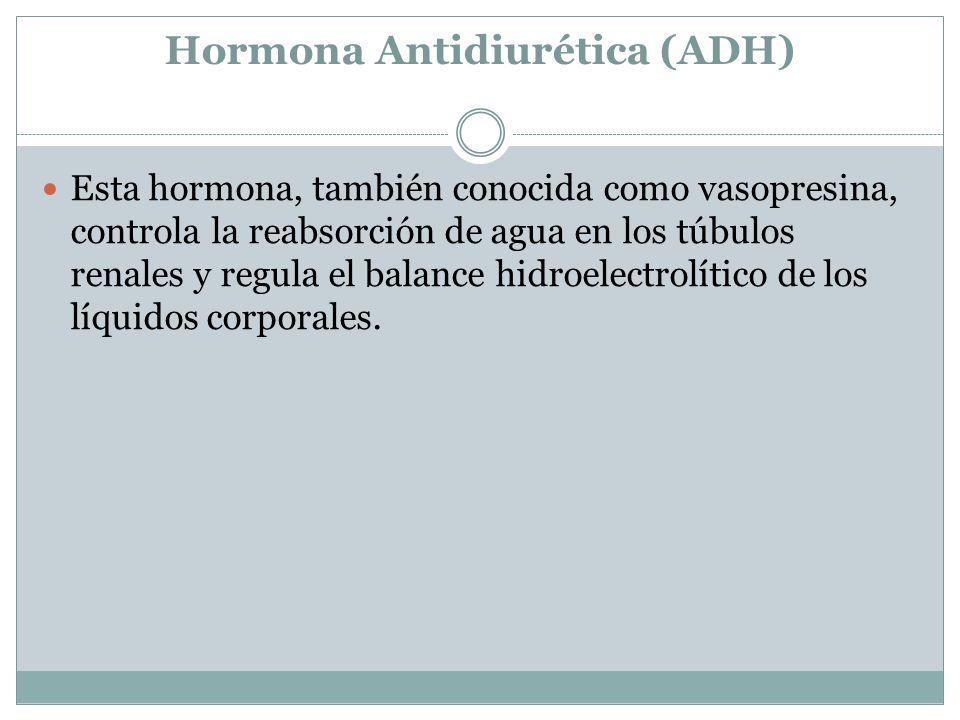 Hormona Antidiurética (ADH) Esta hormona, también conocida como vasopresina, controla la reabsorción de agua en los túbulos renales y regula el balance hidroelectrolítico de los líquidos corporales.