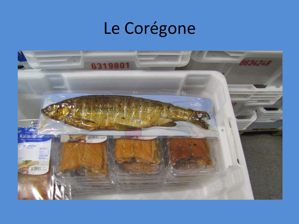 Le Corégone