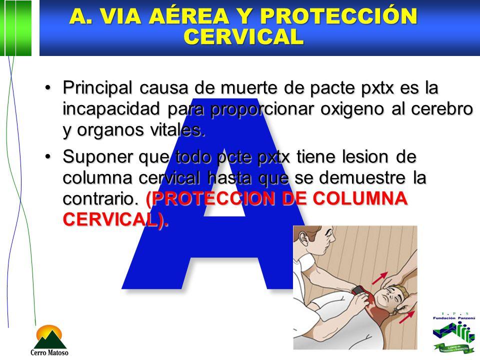 A A. VIA AÉREA Y PROTECCIÓN CERVICAL Principal causa de muerte de pacte pxtx es la incapacidad para proporcionar oxigeno al cerebro y organos vitales.