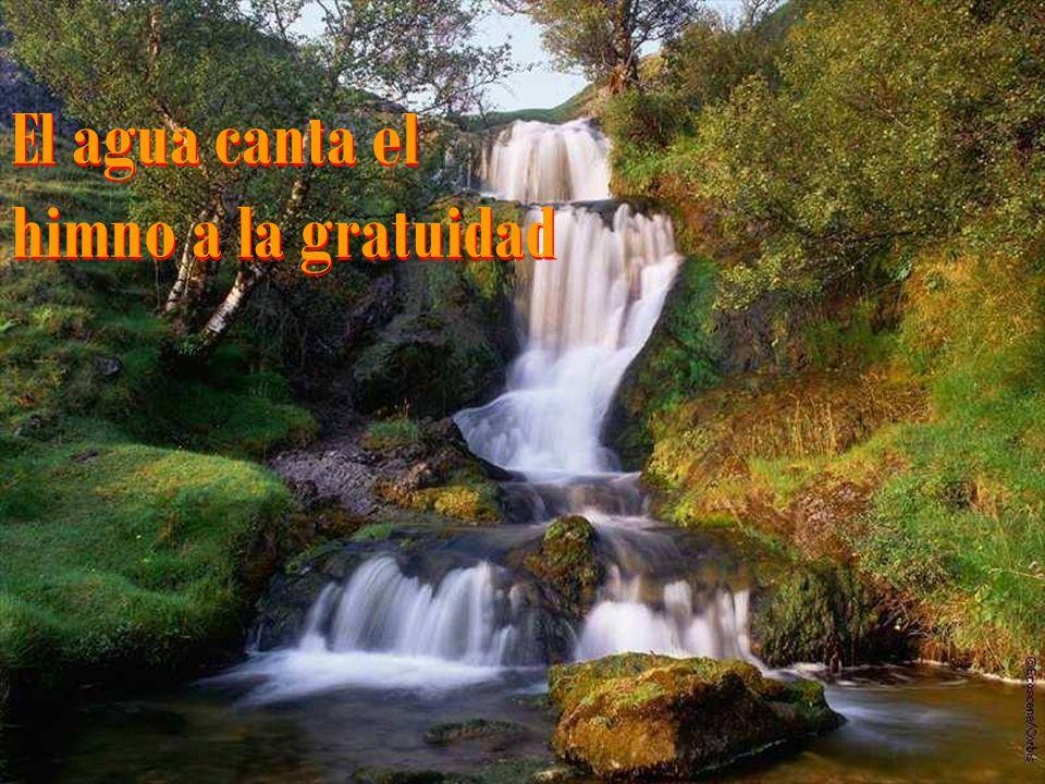 El agua canta el himno a la gratuidad El agua canta el himno a la gratuidad