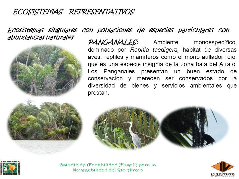 NUEVOS REGISTROS Ramphastos sulfuratus-Chocó Galictis vittata- selva pluvial central del Chocó
