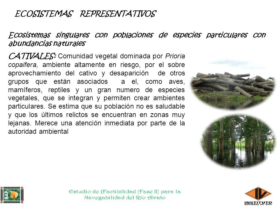 ECOSISTEMAS REPRESENTATIVOS A Los Arracachales, Panganales y Cativales, existen cerca de 300 especies asociada a ellos, lo que hace que sean ecosistemas singulares con poblaciones de especies particulares, que dan sustento a los procesos ecológicos esenciales de un territorio, cuya finalidad principal es la preservación, conservación, restauración, uso y manejo sostenible de los recursos naturales renovables, los cuales brindan la capacidad de soporte para el desarrollo socioeconómico de las poblaciones.