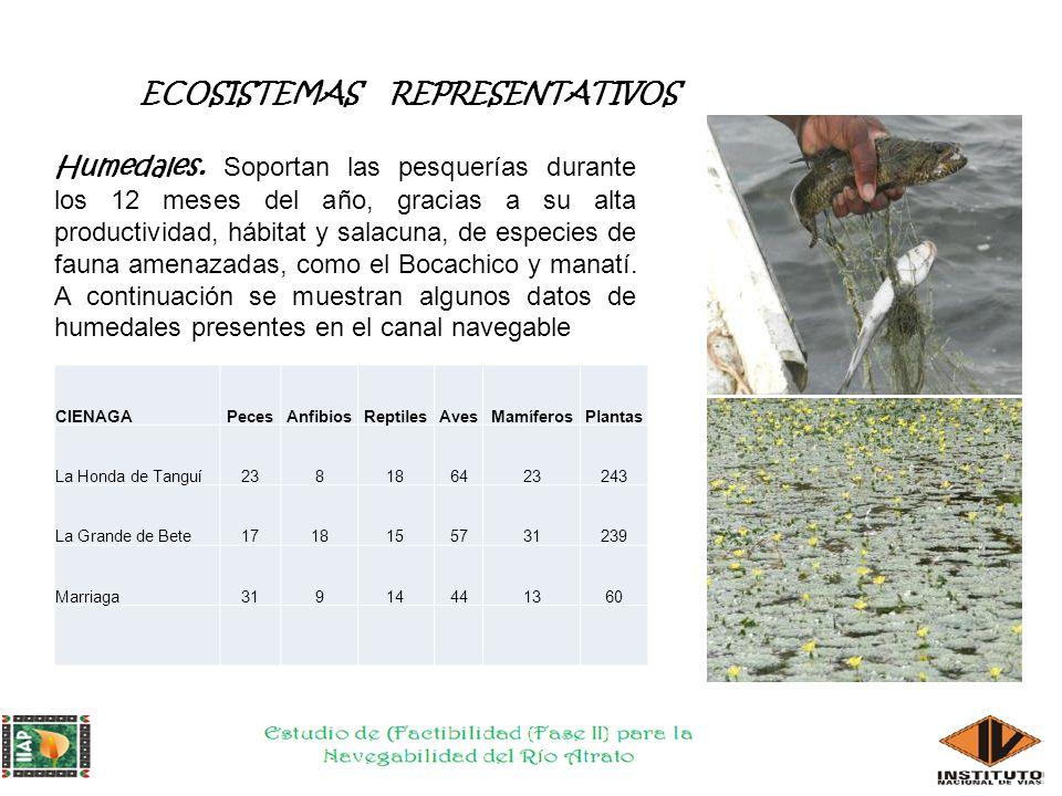 ECOSISTEMAS REPRESENTATIVOS Humedales.