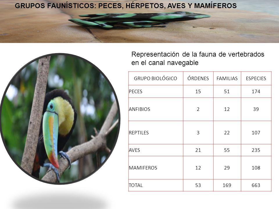 GRUPOS FAUNÍSTICOS: PECES, HÉRPETOS, AVES Y MAMÍFEROS GRUPO BIOLÓGICOÓRDENESFAMILIASESPECIES PECES1551174 ANFIBIOS21239 REPTILES322107 AVES2155235 MAMIFEROS1229108 TOTAL53169663 Representación de la fauna de vertebrados en el canal navegable