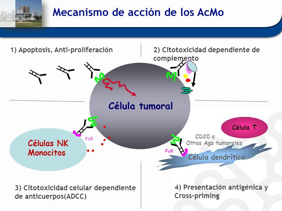 Células NK Monocitos FcR 3) Citotoxicidad celular dependiente de anticuerpos(ADCC) Célula tumoral 1) Apoptosis, Anti-proliferación FcR Célula dendríti