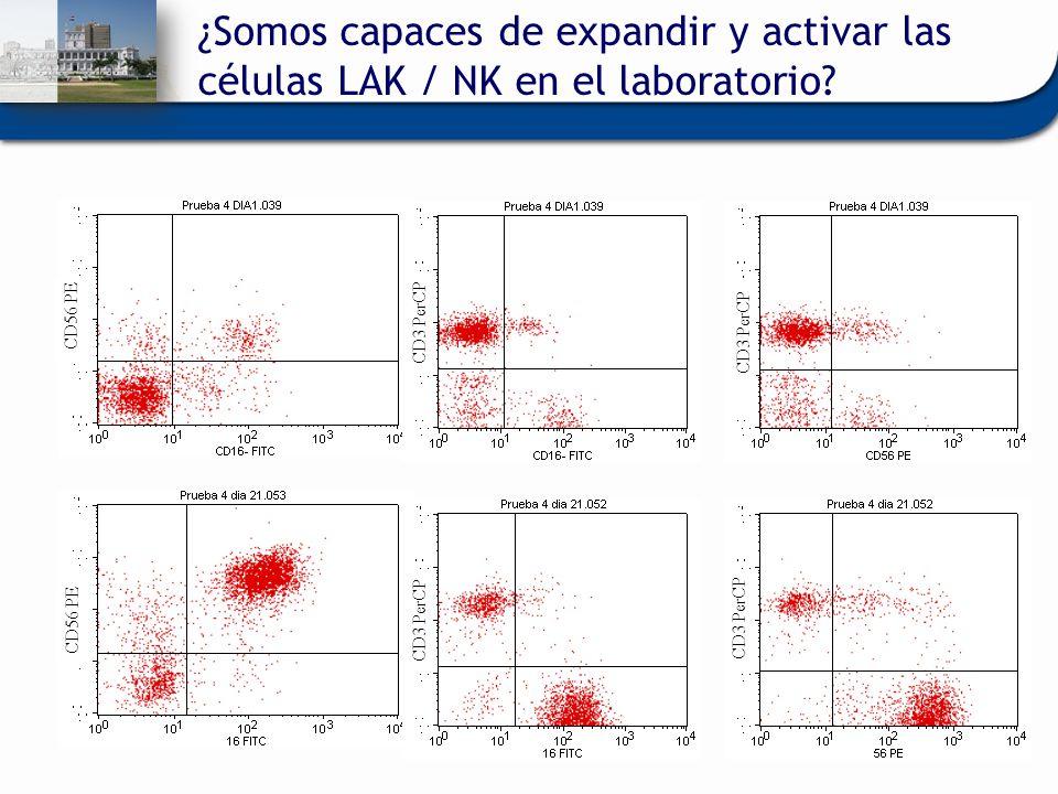 CD56 PE CD3 PerCP ¿Somos capaces de expandir y activar las células LAK / NK en el laboratorio?