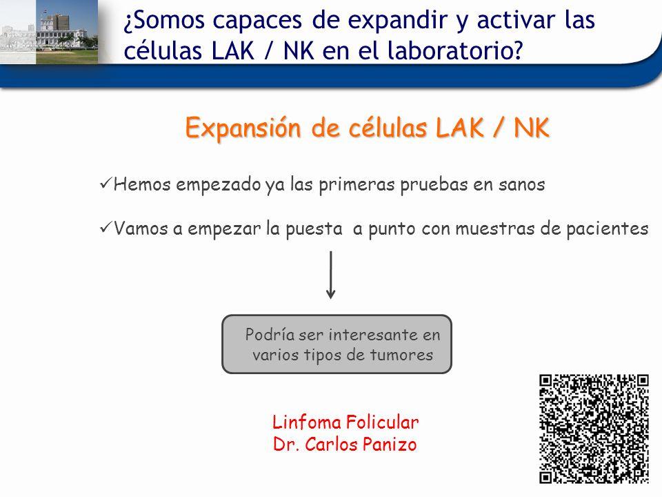 Expansión de células LAK / NK Hemos empezado ya las primeras pruebas en sanos Vamos a empezar la puesta a punto con muestras de pacientes Podría ser i