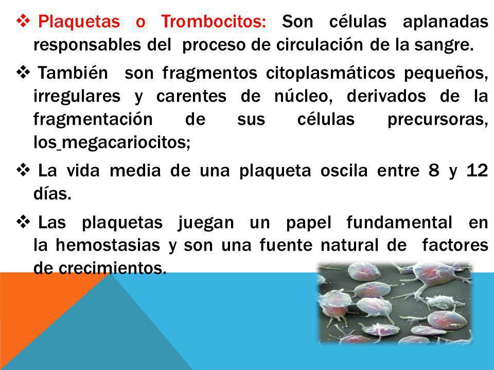 Plaquetas o Trombocitos: Son células aplanadas responsables del proceso de circulación de la sangre. También son fragmentos citoplasmáticos pequeños,