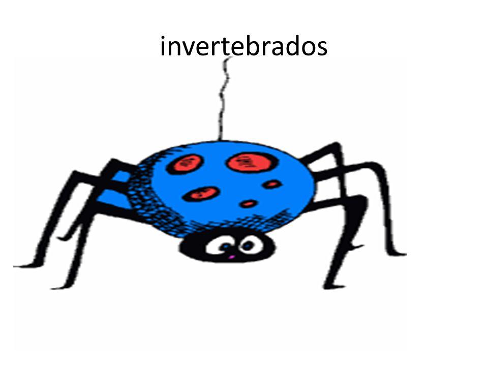 Características o Animales sin esqueleto interno, aunque pueden tener un esqueleto externo o exoesqueleto.