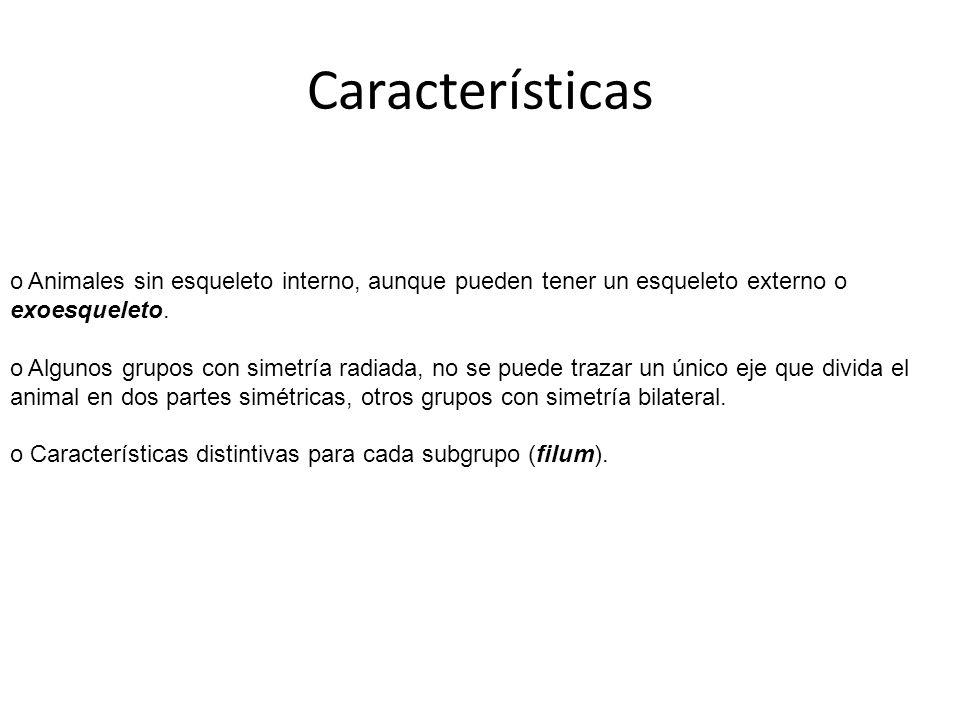 Características o Animales sin esqueleto interno, aunque pueden tener un esqueleto externo o exoesqueleto. o Algunos grupos con simetría radiada, no s