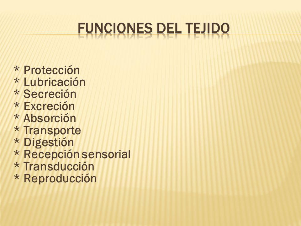 * Protección * Lubricación * Secreción * Excreción * Absorción * Transporte * Digestión * Recepción sensorial * Transducción * Reproducción