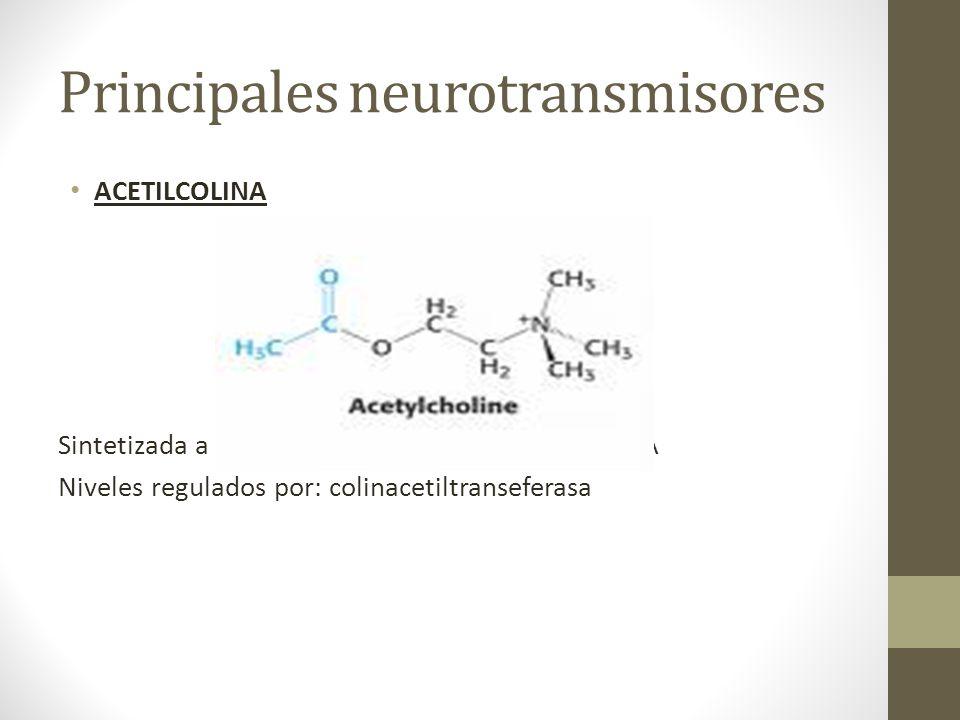 Principales neurotransmisores ACETILCOLINA Sintetizada a partir de la colina y acetil-coenzima A Niveles regulados por: colinacetiltranseferasa