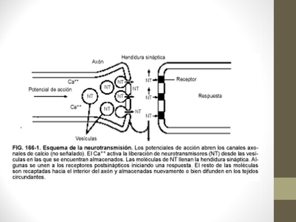 Principales neurotransmisores NT: Neurotransmisor Sust.