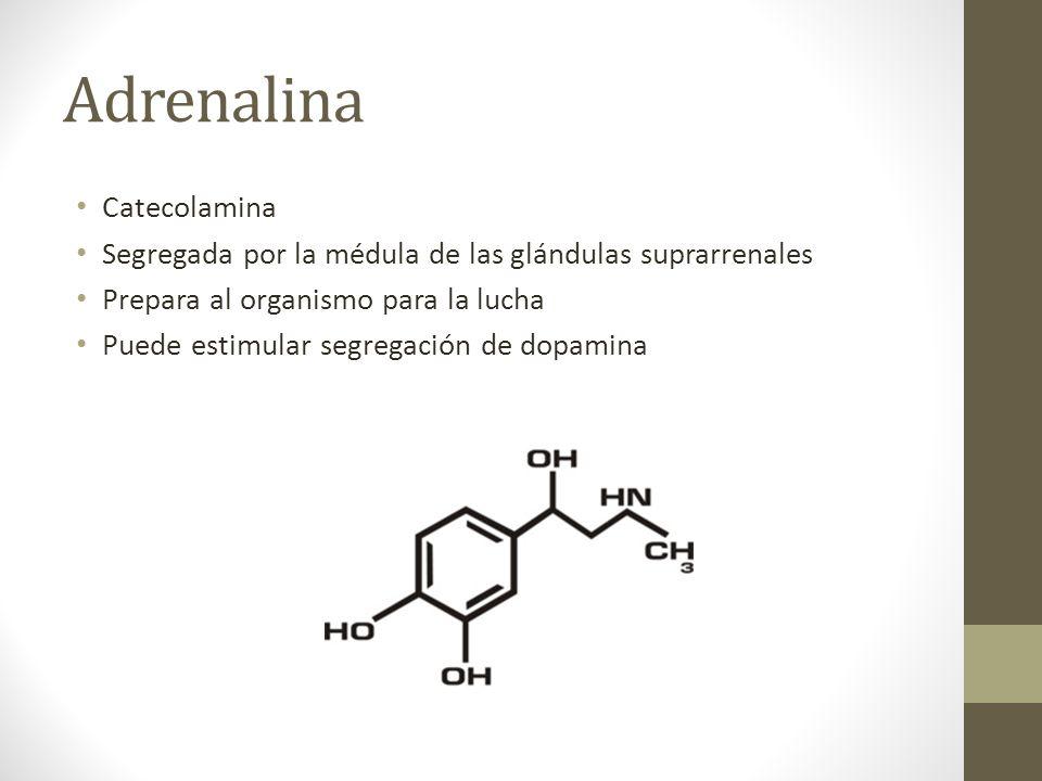 Adrenalina Catecolamina Segregada por la médula de las glándulas suprarrenales Prepara al organismo para la lucha Puede estimular segregación de dopam