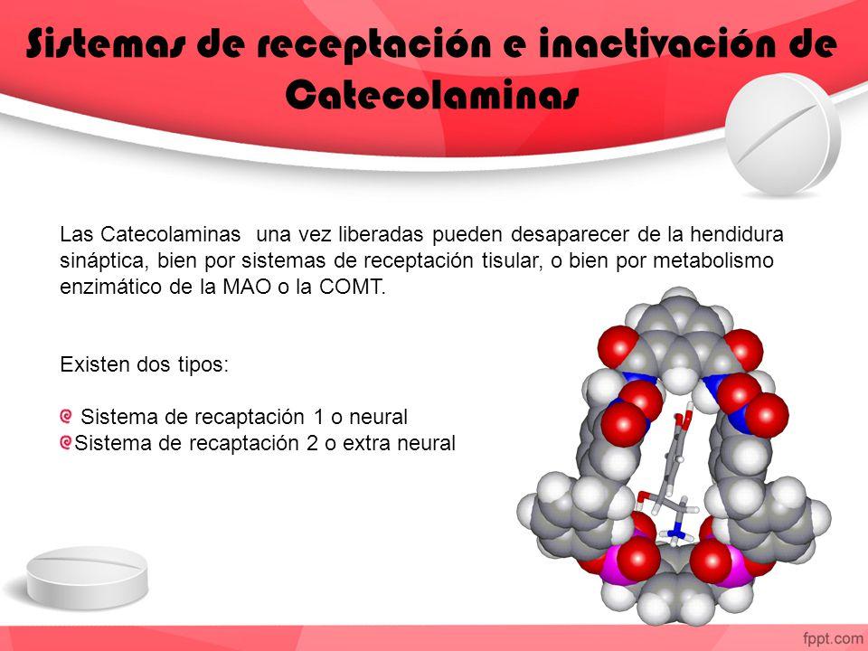 Sistemas de receptación e inactivación de Catecolaminas Las Catecolaminas una vez liberadas pueden desaparecer de la hendidura sináptica, bien por sistemas de receptación tisular, o bien por metabolismo enzimático de la MAO o la COMT.