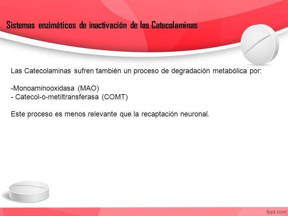 Sistemas enzimáticos de inactivación de las Catecolaminas Las Catecolaminas sufren también un proceso de degradación metabólica por: -Monoaminooxidasa