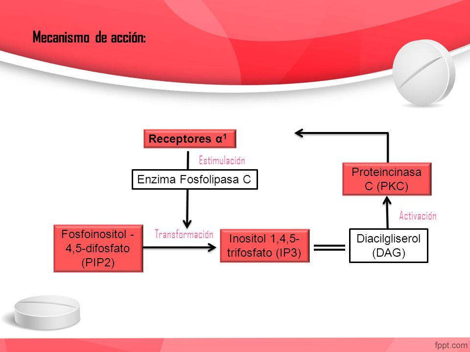Mecanismo de acción: Receptores α 1 Enzima Fosfolipasa C Fosfoinositol - 4,5-difosfato (PIP2) Inositol 1,4,5- trifosfato (IP3) Diacilgliserol (DAG) Proteincinasa C (PKC) Estimulación Transformación Activación