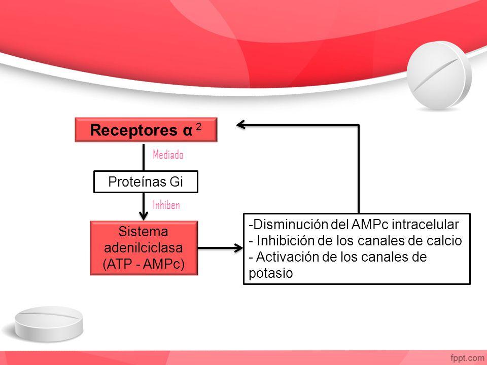 Receptores α 2 Proteínas Gi Sistema adenilciclasa (ATP - AMPc) -Disminución del AMPc intracelular - Inhibición de los canales de calcio - Activación d