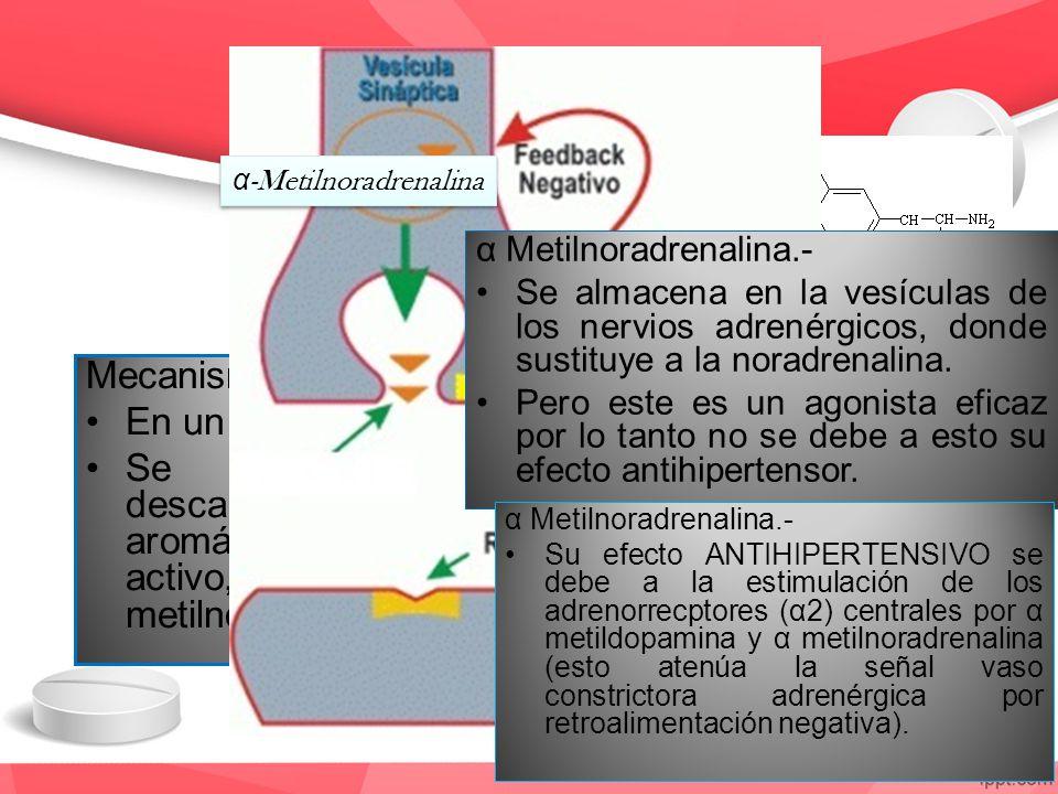 α -Metildopa Mecanismo de acción En un análogo de L-dopa. Se metaboliza por la descarboxilasa de aminoácido L- aromático y produce metabolíto activo,