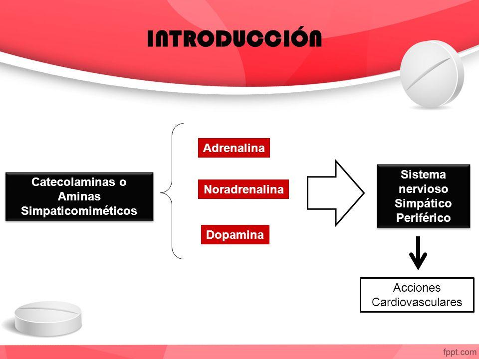 Catecolaminas o Aminas Simpaticomiméticos Catecolaminas o Aminas Simpaticomiméticos Adrenalina Noradrenalina Dopamina Sistema nervioso Simpático Periférico Acciones Cardiovasculares INTRODUCCIÓN