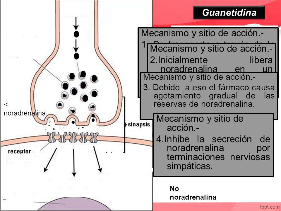 Guanetidina Neurotransmisor falso Mecanismo y sitio de acción.- 1. Se transporta a través de la membrana de los nervios simpáticos por un mecanismo de