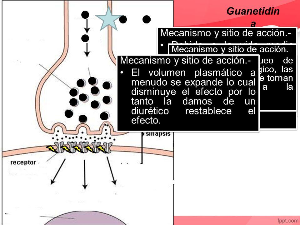 Guanetidin a Mecanismo y sitio de acción.- Debido a la vida media prolongada de la guanetidina el inicio de la simpaticolisis es gradual y persiste durante un periodo comparable después del cese de su administración.