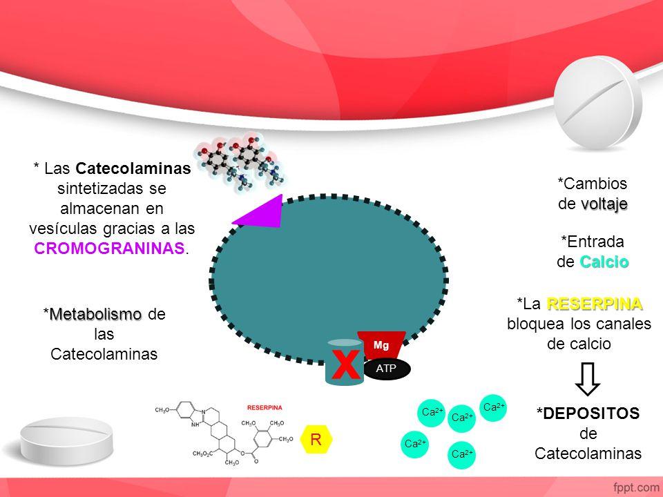 * Las Catecolaminas sintetizadas se almacenan en vesículas gracias a las CROMOGRANINAS. Mg ATP Ca 2+ R Metabolismo *Metabolismo de las Catecolaminas v