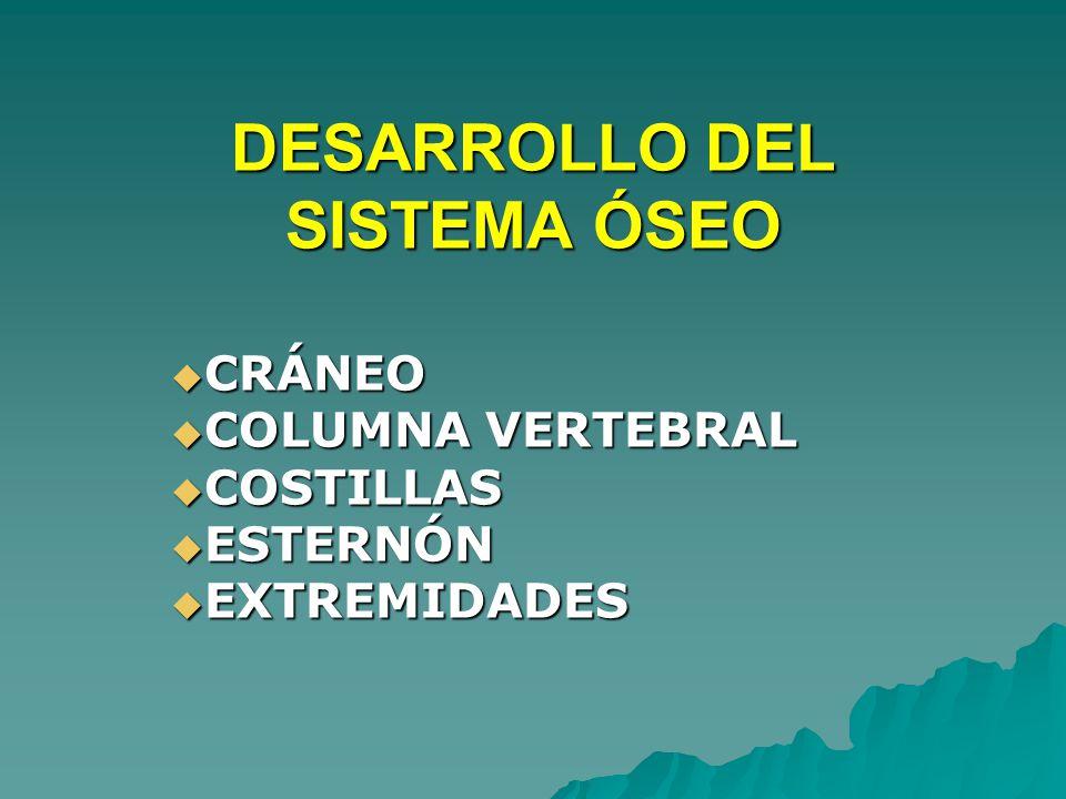 DESARROLLO DEL SISTEMA ÓSEO CRÁNEO CRÁNEO COLUMNA VERTEBRAL COLUMNA VERTEBRAL COSTILLAS COSTILLAS ESTERNÓN ESTERNÓN EXTREMIDADES EXTREMIDADES