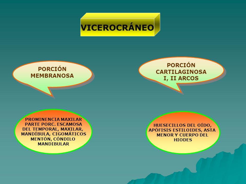 VICEROCRÁNEO PORCIÓN MEMBRANOSA PORCIÓN CARTILAGINOSA I, II ARCOS PORCIÓN CARTILAGINOSA I, II ARCOS PROMINENCIA MAXILAR PARTE PORC. ESCAMOSA DEL TEMPO