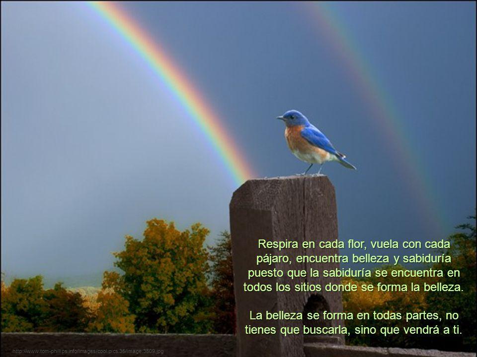 http://www.tom-phillips.info/images/cool.pics.35/image.3509.jpg Respira en cada flor, vuela con cada pájaro, encuentra belleza y sabiduría puesto que la sabiduría se encuentra en todos los sitios donde se forma la belleza.