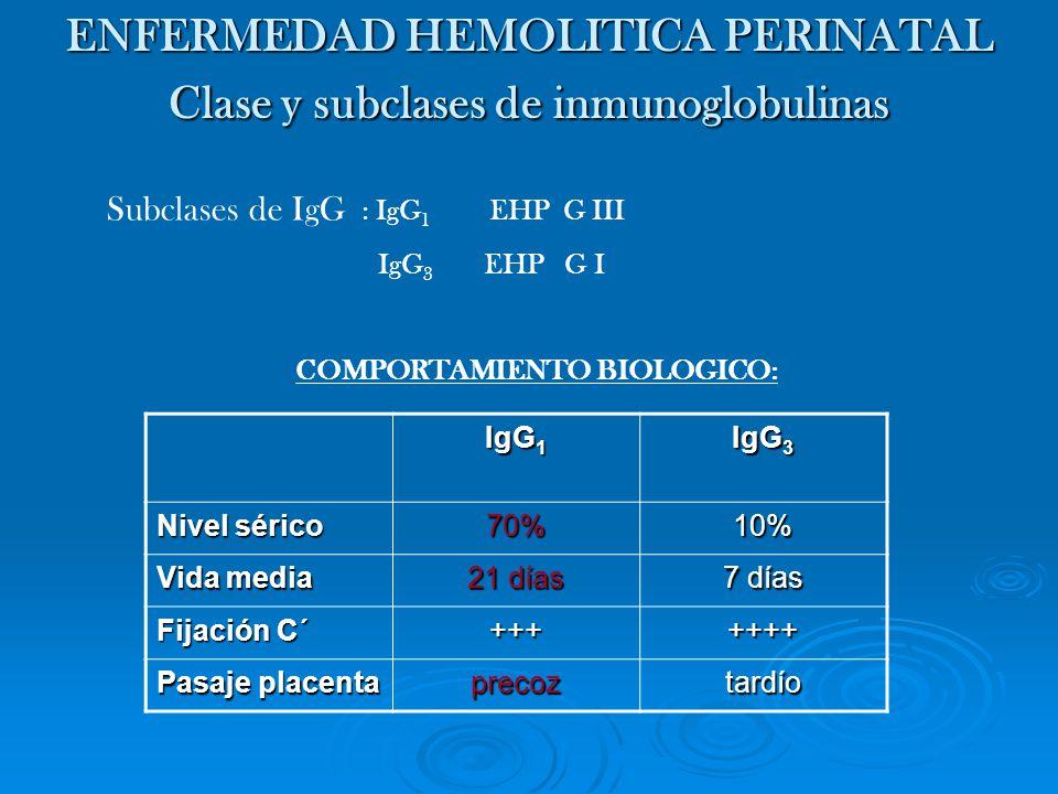Subclases de IgG : IgG 1 EHP G III IgG 3 EHP G I COMPORTAMIENTO BIOLOGICO: ENFERMEDAD HEMOLITICA PERINATAL Clase y subclases de inmunoglobulinas IgG 1