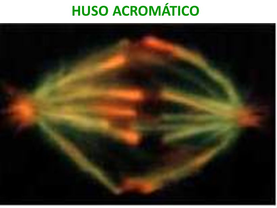 HUSO ACROMATICO USMP-FMH. BMC-2009-II H. Lezama 17