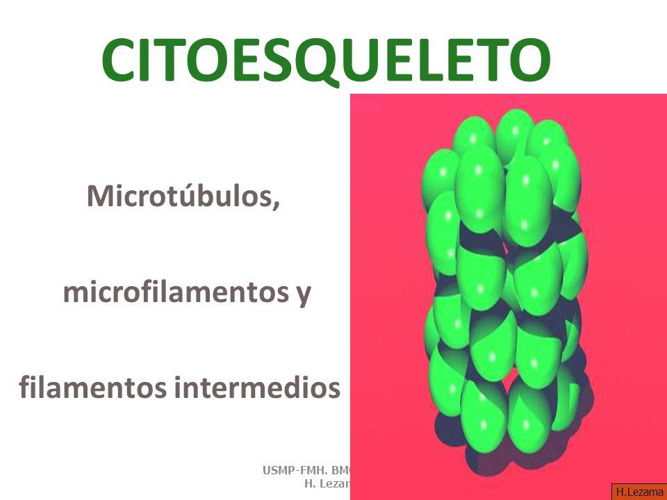 CITOESQUELETO Microtúbulos, microfilamentos y filamentos intermedios USMP-FMH.