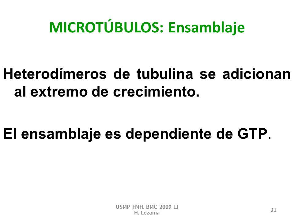 MICROTÚBULOS: función Andamio para determinar la forma celular.