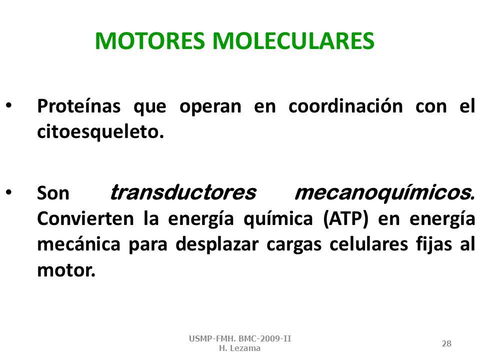 MICROTÚBULOS - PRM USMP-FMH. BMC-2009-II H. Lezama 27