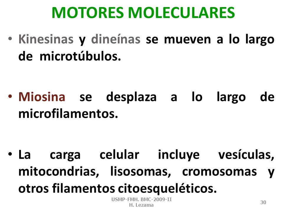 MOTORES MOLECULARES MIOSINAS KINESINAS DINEÍNAS USMP-FMH. BMC-2009-II H. Lezama 29