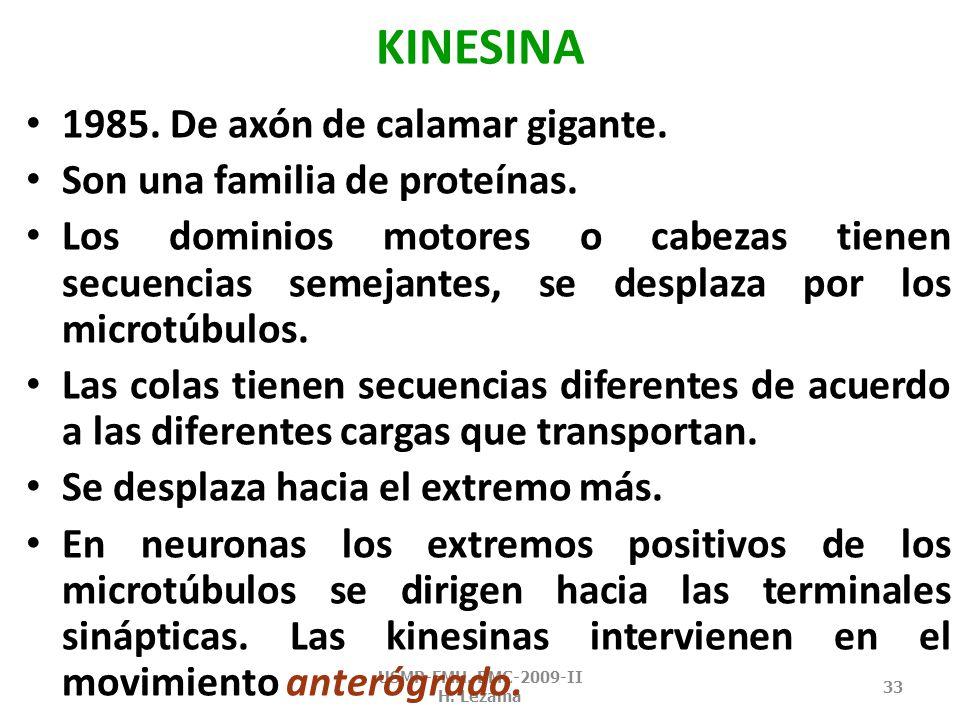 MOTORES MICROTUBULARES: kinesina USMP-FMH. BMC-2009-II H. Lezama 32