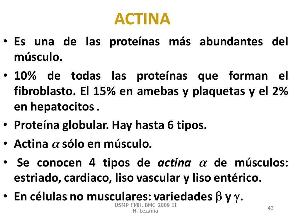 ACTINA USMP-FMH. BMC-2009-II H. Lezama 42