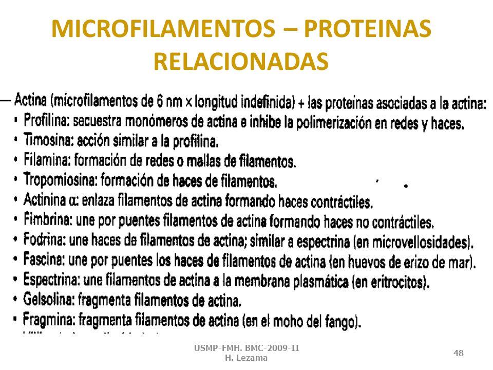 MICROVELLOS Y ESTEREOCILIOS USMP-FMH. BMC-2009-II H. Lezama 47