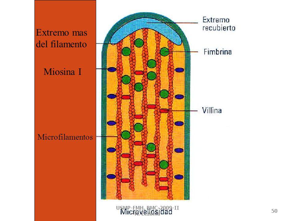 MICROFILAMENTOS – PROTEINAS RELACIONADAS USMP-FMH. BMC-2009-II H. Lezama 49