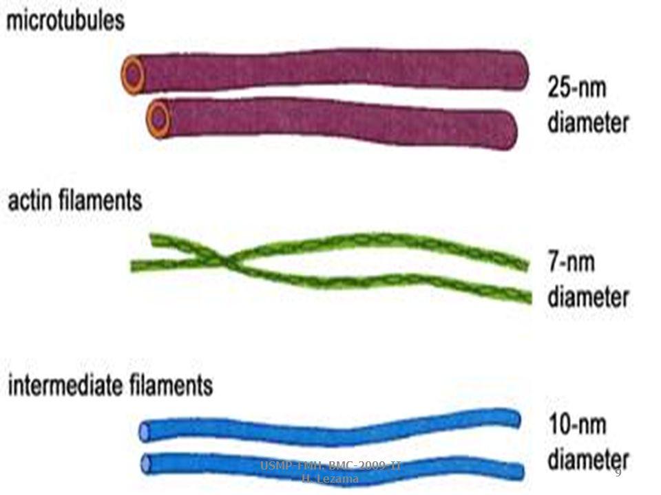 MICROFILAMENTOS Finas fibras proteicas.
