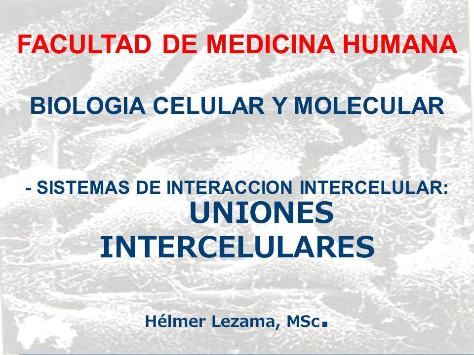 UNIONES ESPECIALIZADAS Mantienen la integridad estructural de los tejidos USMP-FMH-BMC H. Lezama 12
