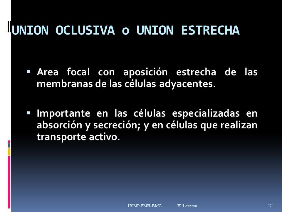 UNION OCLUSIVA o UNION ESTRECHA Area focal con aposición estrecha de las membranas de las células adyacentes.