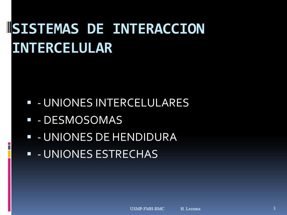 SISTEMAS DE INTERACCION INTERCELULAR - UNIONES INTERCELULARES - DESMOSOMAS - UNIONES DE HENDIDURA - UNIONES ESTRECHAS USMP-FMH-BMC H.